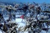 Gubernur Sulteng usulkan TN Togean jadi cagar biosfer dunia