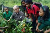 Peneliti Jepang kembangkan bibit kedelai di Jayapura