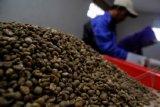 AEKI : Ekspor kopi Lampung 10.058 ton