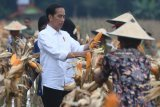 Kadin assistance could reach two million farmers by 2023: President Jokowi