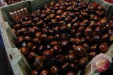 Cabai dan Jengkol penyumbang inflasi saat Ramadhan