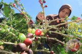 Produksi menurun, eksportir kewalahan penuhi permintaan kopi Gayo