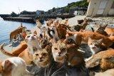 Komunitas pecinta kucing sosialisasikan