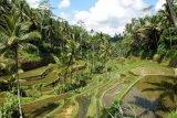 Ubud jadi percontohan wisata kuliner dunia