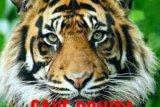 Warga Gelar Ritual Sema Kampung Mohon Keselamatan dari Harimau Bonita