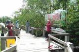 18.000 wisatawan kunjungi objek wisata jalur penelusuran hutan bakau Pariaman