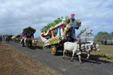 Warga mengikuti Festival Pegon Hias di Desa Sumberejo, Ambulu, Jember, Jawa Timur, Sabtu (23/6). Festival Pegon atau alat transportasi tradisional yang ditarik sapi atau cikar merupakan acara tahunan yang digelar setiap hari raya Ketupat untuk silaturrahmi dan berpawai melalui jalan-jalan desa menuju Pantai Watu Ulo. Antara Jatim/Seno/zk/18.