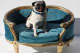 Anjing jadi pusat perhatian di penayangan perdana film