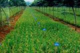 Lahan tidur dan telantar disarankan untuk pertanian padi gogo