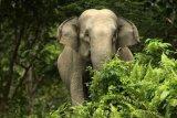 Berjalan sejauh 500 km, gerombolan gajah menghampiri Kota Kunming di China