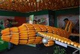 Akademisi UNU ingatkan pentingnya inovasi produk pangan