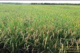 Anggota DPR Sulaeman Hamzah apresiasi percepatan pembangunan pertanian di Papua