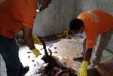 Polisi Jayapura temukan tulang belulang manusia