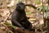 BUMN HADIR - Kunjungan ke Tangkoko mengajak SMN jaga lingkungan