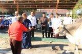 Polda Sulteng berqurban 179 ekor ternak
