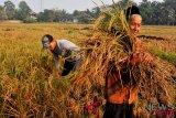 Kementan catat tujuh provinsi alami defisit beras
