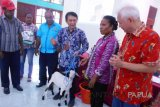 BPPT jadikan Biak sentra peternakan kambing Papua