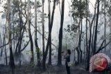 Suku asli Papua jaga Taman Nasional Wasur
