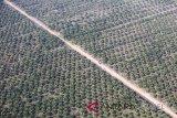 Harga sawit Riau turun menjadi Rp1.325,25