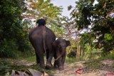 KLHK berhasil tekan konflik hutan tanaman industri di Riau, begini penjelasannya