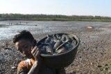 Warga membawa ikan hasil tangkapan dari Waduk Saradan yang hampir mengering di Saradan, Kabupaten Madiun, Jawa Timur, Kamis (27/9). Setiap hari, banyak warga di sekitar waduk berburu ikan, karena waduk yang memiliki daerah irigasi seluas sekitar seribu hektare tersebut saat ini hampir kering, sehingga ikan mudah ditangkap. Antara Jatim/Siswowidodo/mas/18.