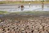 Warga mencari ikan di Waduk Saradan yang hampir mengering di Saradan, Kabupaten Madiun, Jawa Timur, Kamis (27/9). Setiap hari, banyak warga di sekitar waduk berburu ikan, karena waduk yang memiliki daerah irigasi seluas sekitar seribu hektare tersebut saat ini hampir kering, sehingga ikan mudah ditangkap. Antara Jatim/Siswowidodo/mas/18.