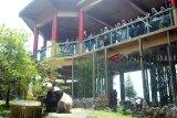 Seekor Giant Panda jantan bernama Cai Tao memakan bambu saat perayaan satu tahun kedatangannya di Istana Panda, Taman Safari Indonesia, Cisarua, Kabupaten Bogor, Jawa Barat, Sabtu (29/9). Sepasang Giant Panda bernama Cai Tao (jantan) dan Hu Chun (betina) yang didatangkan dari negara Cina dan merupakan satwa ikonik dunia tersebut telah satu tahun berada di Istana Panda Indonesia dalam kondisi sehat, lincah dan semakin bertambah berat badannya. ANTARA JABAR/Arif Firmansyah/agr/18.