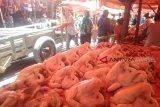 Hati-hati bakteri E.Coli pada ayam potong