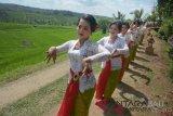 Sejumlah penari menampilkan Tari Rejang Renteng dalam rangkaian Festival Jatiluwih 2018 di Desa Jatiluwih, Tabanan, Bali, Jumat (14/9/2018). Festival yang berlangsung selama dua hari tersebut menampilkan kesenian dan kearifan lokal setempat untuk menarik minat wisatawan datang ke Jatiluwih. ANTARA FOTO/Wira Suryantala/wdy/2018