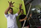 Petugas Balai Besar Konservasi Sumber Daya Alam (BBKSDA) Provinsi Riau menunjukkan jerat yang membunuh Harimau Sumatera liar, di Kota Pekanbaru, Riau, Kamis (27/9/2018). Seekor harimau betina yang mengandung dua janin tewas akibat jerat kawat baja di Kabupaten Kuantan Singingi pada Rabu (26/9), dan kini warga pemasang jerat tengah diperiksa karena perbuatannya membunuh satwa dilindungi yang terancam punah itu.  (ANTARA FOTO/FB Anggoro)