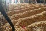 Pengusaha tempe Jayapura kurangi produksi terkait harga kedelai