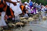Pemkot Magelang ajak anak-anak gemar makan ikan