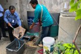 Warga Winongo Yogyakarta panen lele cendol