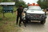 Seorang petugas dan anjing pelacak dari Unit K9 Bea Cukai Kantor Wilayah Kalimantan Bagian Barat (Kanwil) Kalbagbar memeriksa kendaraan dari Malaysia yang hendak masuk ke Indonesia di perbatasan Jagoi Babang, Kabupaten Bengkayang, Kalbar, Rabu (17/10/2018). Guna mengantisipasi penyelundupan narkoba, Unit K9 Bea Cukai Kanwil Kalbagbar melakukan pemeriksaan dengan mengunakan anjing pelacak yang mampu mendeteksi keberadaan barang ilegal tersebut. ANTARA FOTO/HS Putra/jhw
