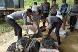 Sejumlah anggota kepolisian dari Polres Sanggau mengangkat kantung berisi daging beku ilegal dari gudang penampungan di Dusun Kuya, Desa Lubuk Sabuk, Kecamatan Sekayam, Kabupaten Sanggau, Kalbar, Sabtu (20/10/2018). Jajaran Polres Sanggau menyita 0,5 ton daging sapi, ayam dan ikan ilegal asal Malaysia yang sudah dibekukan dalam lemari pendingin karena tidak dilengkapi dengan dokumen resmi. ANTARA FOTO/Agus Alfian/jhw