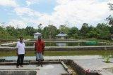 BBI Timika berupaya produksi 50 ribu bibit ikan unggul