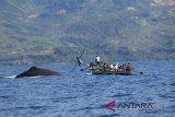 BUMDes kelola usaha wisata penangkapan ikan paus