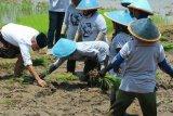Pemprov Jateng Dorong Modernisasi Alat Pertanian