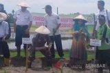 Pemkab Pessel kembangkan beras merek dagang Rajo Pasisia