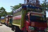 Bone kirim 150 truk bantuan ke Palu