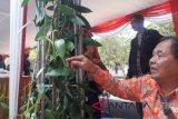 Prospektif, petani Temanggung didorong kembangkan vanili