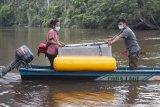 Dua anggota tim penyelamat memegang kandang berisi satu individu Orangutan yang dievakuasi dari kebun warga saat hendak ditranslokasi di Kabupaten Ketapang, Kalbar, Jumat (26/10/2018). Tim gabungan dari IAR Indonesia, Balai Taman Nasional Gunung Palung (BTNGP) dan Balai Konservasi Sumber Daya Alam (BKSDA) Kalbar Seksi Konservasi Wilayah (SKW) I Ketapang memindahkan satu individu Orangutan Kalimantan (Pongo pygmaeus) bernama Nayo (20 tahun) seberat 60 Kilogram yang dievakuasi dari kebun warga di Desa Sungai Awan Kiri ke kawasan TNGP Ketapang. ANTARA FOTO/HO/Heribertus-IAR Indonesia/jhw