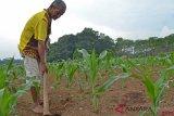 Kementan mengembangkan korporasi tanaman pangan di 130 kabupaten