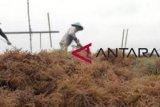 Pemerintah diminta lindungi harga rumput laut Nunukan
