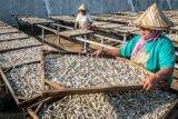 Masyarakat Yogyakarta jangan takut makan ikan teri