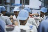 Petugas melakukan pengemasan vaksin di laboratorium milik PT Bio Farma, Bandung, Jawa Barat, Jumat (23/11/2018). Direktur Utama Bio Farma M Rahman Roestan menargetkan penjualan ekspor vaksin ke negara berkembang hingga tahun 2018 bisa mencapai 71,6 juta dolar AS. ANTARA JABAR/M Agung Rajasa/agr