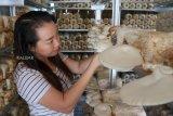 Pengusaha Jamur Tiram Betty (38 tahun) memeriksa pertumbuhan Jamur Tiram di media budidaya (baglog) saat panen di kediamannya di Sungai Raya Dalam, Pontianak, Kalimantan Barat, Kamis (22/11/2018). Betty yang melakukan usaha budidaya jamur tiram dengan mendatangkan baglog dari petani lokal Kalbar dan Pulau Jawa tersebut, karena peluang bisnisnya menjanjikan serta adanya permintaan pasar yang terus meningkat dengan harga jamur yang dijual sekitar Rp50 ribu per kilogram. ANTARA FOTO/Jessica Helena Wuysang