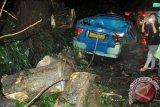 Pohon tumbang menimpa angkot