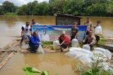 Legislator Seruyan: Penebaran benih ikan perlu dilakukan berkelanjutan