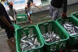 Dana desa bisa biayai alat tangkap ikan